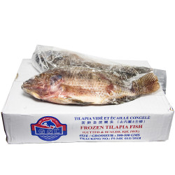 Frozen Tilapia Fish in Box - 5lbs