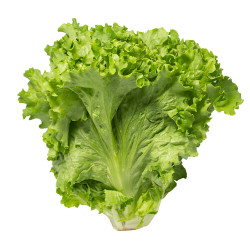 Green Leaf Lettuce - 1 PC